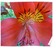 heart of a flower, 30 Poster
