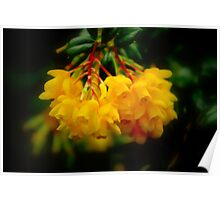 Yellow Bells Poster