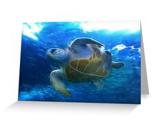At the Two Oceans Aquarium. Cape Town. South Africa Greeting Card