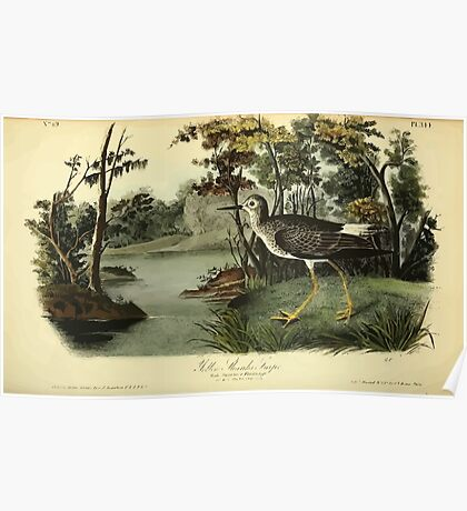 James Audubon Vector Rebuild - The Birds of America - From Drawings Made in the United States and Their Territories V 1-7 1840 - Yellow Shanks Snipe Poster