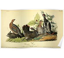 James Audubon Vector Rebuild - The Birds of America - From Drawings Made in the United States and Their Territories V 1-7 1840 - Canada Grouse Poster