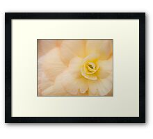 Coloured Begonia Framed Print