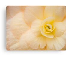 Coloured Begonia Canvas Print