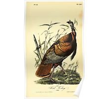 James Audubon Vector Rebuild - The Birds of America - From Drawings Made in the United States and Their Territories V 1-7 1840 - Wild Turkey Poster