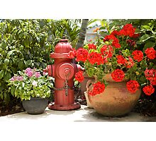 Garden Hydrant Photographic Print