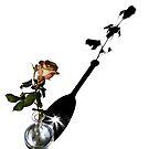 Rose and shadow by Barbara  Corvino