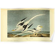 James Audubon Vector Rebuild - The Birds of America - From Drawings Made in the United States and Their Territories V 1-7 1840 - 499 Poster