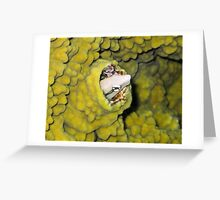 Fish in Coral Greeting Card