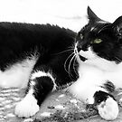 Black & White Moggy 1 by LisaRoberts