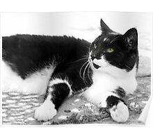 Black & White Moggy 1 Poster