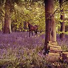 Vintage Bluebell Forest~ by WJPhotography