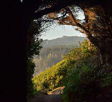 Trinidad Head, Trinidad, California, USA by Mike Kunes