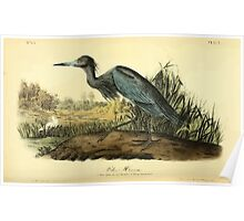 James Audubon Vector Rebuild - The Birds of America - From Drawings Made in the United States and Their Territories V 1-7 1840 - Blue Heron Poster