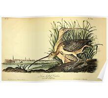 James Audubon Vector Rebuild - The Birds of America - From Drawings Made in the United States and Their Territories V 1-7 1840 - Long Billed Curlew Poster