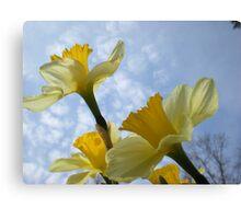 Daffodils & Sky Canvas Print