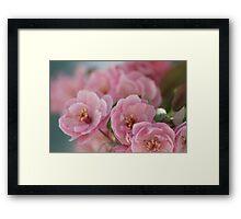 Bubblegum Blossoms Framed Print