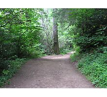 Secluded Path Photographic Print