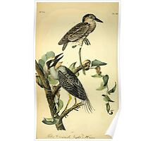 James Audubon Vector Rebuild - The Birds of America - From Drawings Made in the United States and Their Territories V 1-7 1840 - Yellow Crowned Nigh Heron Poster