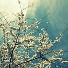 Blossomy Sky by Bella  Cirovic