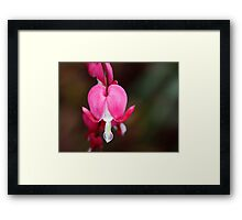 A Bleeding Heart Framed Print
