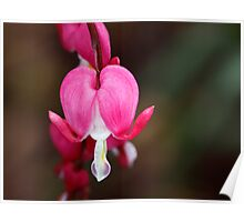 A Bleeding Heart Poster