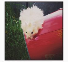 Joltography: Gary by hamsters