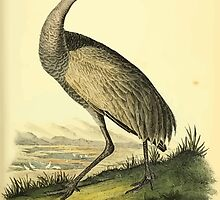 James Audubon Vector Rebuild - The Birds of America - From Drawings Made in the United States and Their Territories V 1-7 1840 - Whooping Crane Young by wetdryvac