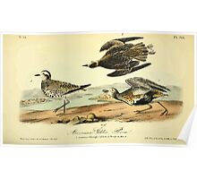 James Audubon Vector Rebuild - The Birds of America - From Drawings Made in the United States and Their Territories V 1-7 1840 - American Golden Plover Poster