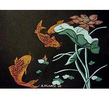 Chinese Goldfish Photographic Print