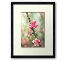 pink & green blossoms Framed Print