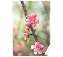 pink & green blossoms Poster