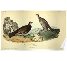 James Audubon Vector Rebuild - The Birds of America - From Drawings Made in the United States and Their Territories V 1-7 1840 - Dusky Grouse Poster