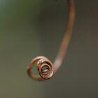 Twirl by Chamika Amarasiri