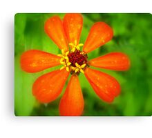 Pinwheel in Orange Canvas Print