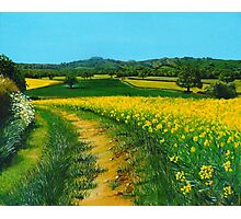 Downland Gold Photographic Print