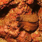 Double moray eel by jenitae