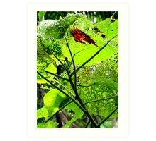 Red bark on green leaf Art Print