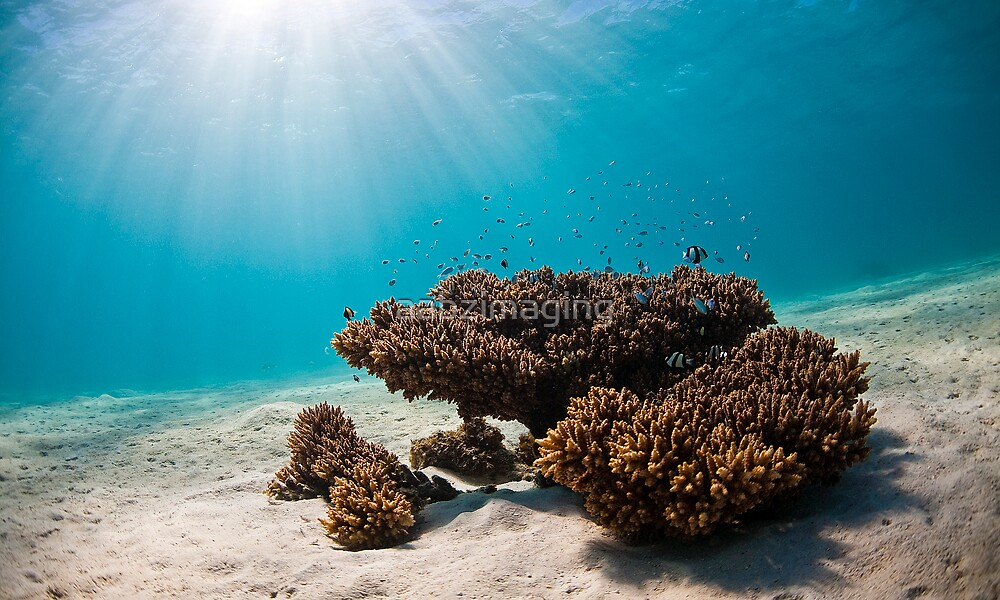 Underwater Morning by aabzimaging
