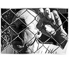 David C - Trapped - Harsh B&W Poster