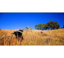 Dead Tree Hill, Sofala, NSW Photographic Print