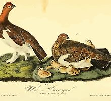 James Audubon Vector Rebuild - The Birds of America - From Drawings Made in the United States and Their Territories V 1-7 1840 - Willow Ptarmigan by wetdryvac
