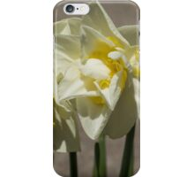 Pastel Yellow Spring - a Pair of Double Daffodils iPhone Case/Skin