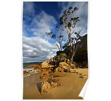 Cocora Beach - Eden Poster