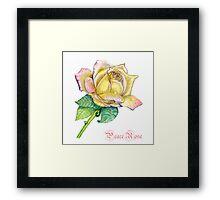 Peace Rose Framed Print