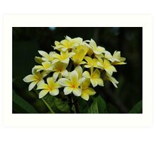 Yellow Frangipanis Art Print