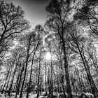 The Monochrome Forest by DavidHornchurch