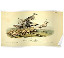 James Audubon Vector Rebuild - The Birds of America - From Drawings Made in the United States and Their Territories V 1-7 1840 - Black Bellied Plover Poster