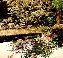 Pond Reflections by Richard Hamilton-Veal