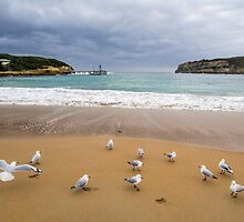 Meeting of the Gulls by Joel Bramley