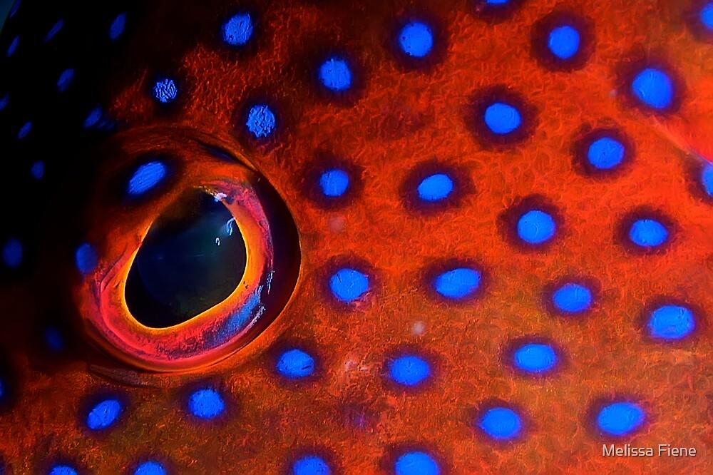 Coral Trout Eye by Melissa Fiene